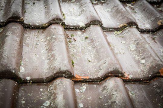 traitement de toiture anti mousse