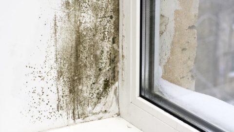 Humidité des murs