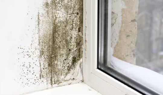 humidite mur humide