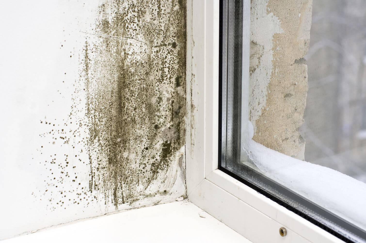 Mur humide humidite mur