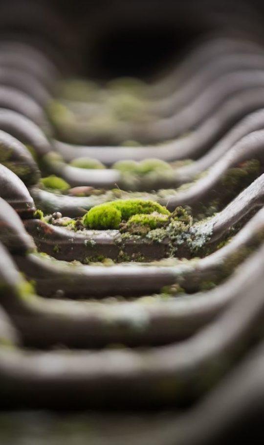traitement anti mousse toiture
